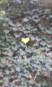 Leaf-heart-Merano