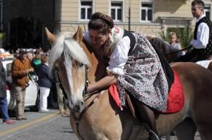Haflinger horse in Merano