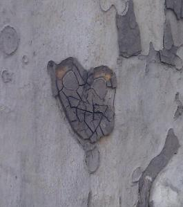 A heart on a tree in Merano